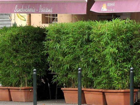 bambus als sichtschutz f 252 r die gastronomie kaufen bambus shop der bambusb 214 rse terrase ideas