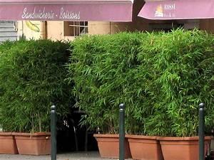 Bambus Als Sichtschutz Im Kübel : bambus als sichtschutz f r die gastronomie kaufen bambus shop der bambusb rse garten ~ Frokenaadalensverden.com Haus und Dekorationen