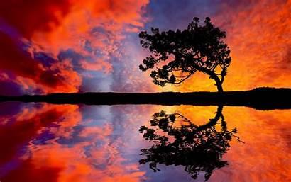Sunset Amazing Wallpapers Reflection Tree Qhd Desktop