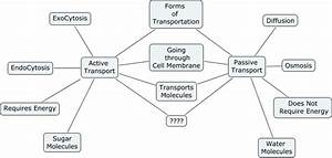 Phong--Compare Active & Passive Transport