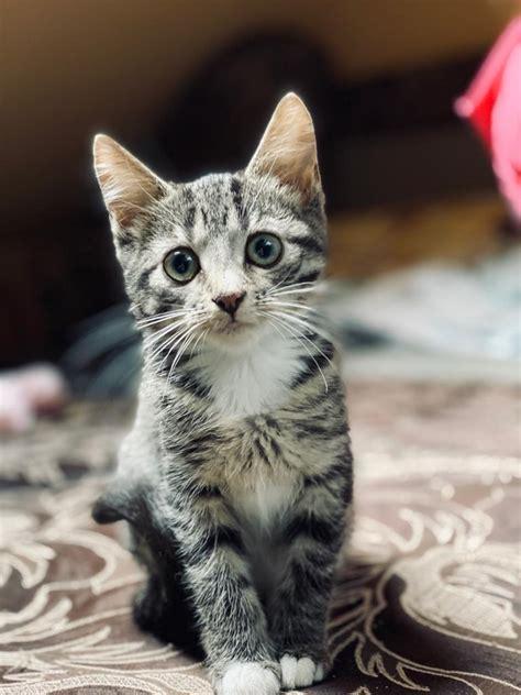 Desmit burvīgi kaķēni meklē mājas - Revici