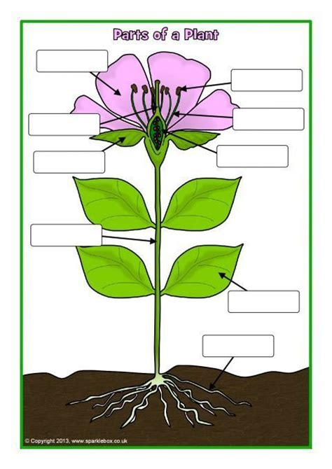 parts   plant  flower postersworksheets sb