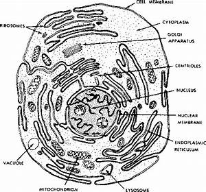 Cytoplasm Coloring Pages