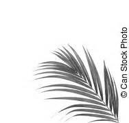Palme Schwarz Weiß : bl tter baum handfl che hintergrund schwarz wei es zeichnung suche clipart illustrationen ~ Eleganceandgraceweddings.com Haus und Dekorationen
