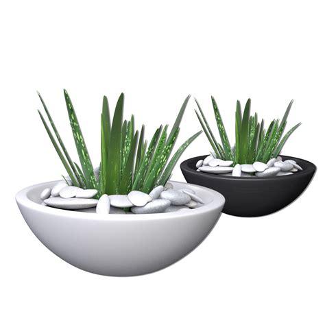 model aloe vera potted plant  cgtrader