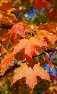 Tree Identification Wisconsin Dnr