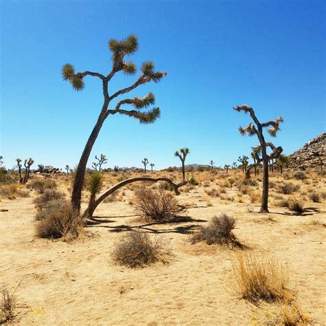Joshua Tree National Park California Lets All Travel