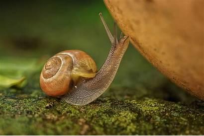 Snail Macro Caracol Animals Moss Snails Desktop
