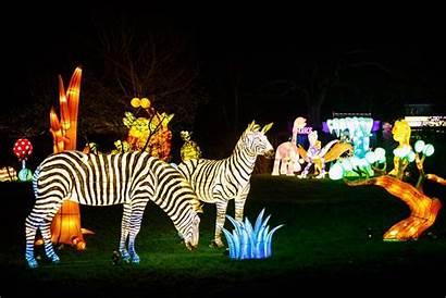 Festival Lantern London Lightopia