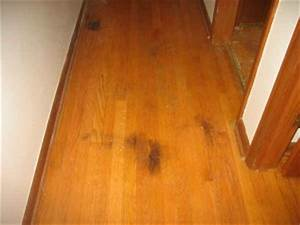 pet stain removal tips louisville mcw wood flooring With how to remove pet stains from wood floors