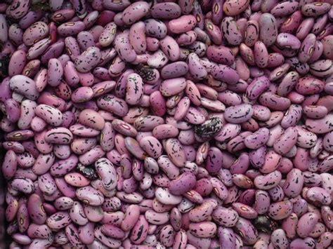 recette cuisine ete graines de haricots d 39 espagne