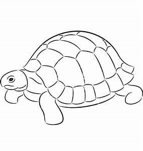 Tortoise clipart outline - Pencil and in color tortoise ...