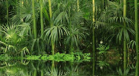 potager cuisine bambou entretien arrossage et rempotage