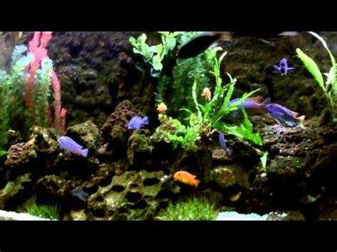 diy rock cave aquarium background  pvc pipes