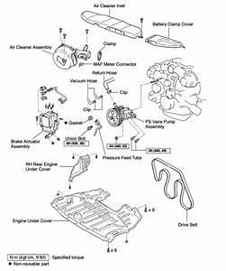 Lexus Es330 Parts Diagramplant Stem Parts Diagram  U2022 Downloaddescargar Com