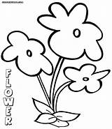 Flower Coloring Pages Colorings sketch template