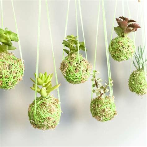 succulent planting ideas  tutorials succulent garden ideas page    balcony