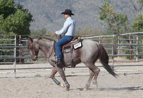 horses arizona training tucson horse ranch quarter train lope trains stables adam