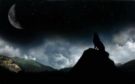 1080p Lone Wolf Hd Wallpaper by Wolf Wallpapers Top Free Wolf Backgrounds