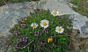 Berg Des Garten : kostenlose foto natur gras bl hen berg wei wiese blatt blume stein herbst botanik ~ Indierocktalk.com Haus und Dekorationen