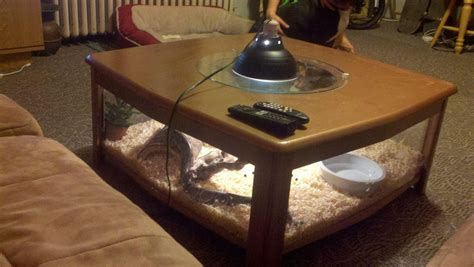 Bearded dragons are largely terrestrial, and your proposed enclosure just doesn't have sufficient floor space. Homemade coffee table snake cage. Snake terrarium, reptile cage, cage table. Michael Briehler ...