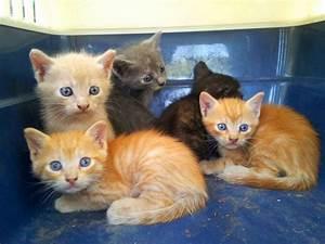 Eur, gattini abbandonati e salvati dai vigili Cercasi adozione 1 di 1 Roma Repubblica it