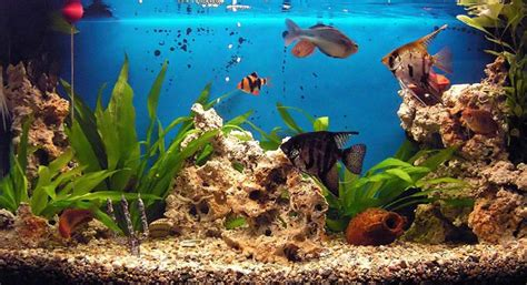 fond d ecran aquarium maxalae tlcharger aquarium screensaver un conomiseur dcran