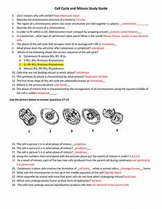 Cell Cycle And Mitosis Study Guide