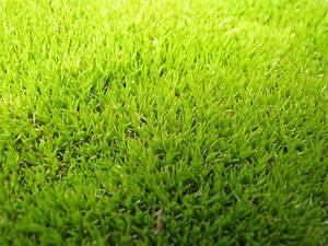 scleranthus uniflorus planter et entretenir ooreka With modeles de rocailles jardin 2 crassula planter et entretenir ooreka