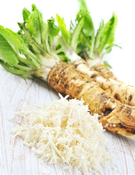what is horseradish made from the healing powers of raw horseradish a natural antibiotic natural health mother earth news