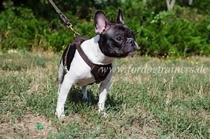Hundebekleidung Französische Bulldogge : welpengeschirr aus leder f r franz sische bulldogge 59 9 ~ Frokenaadalensverden.com Haus und Dekorationen