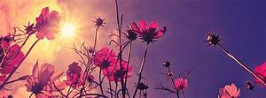 Nice Flower At Sunrise Facebook Cover Photo ...
