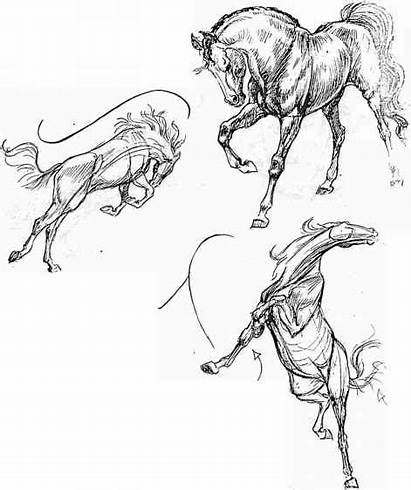 Action Animal Poses Line Draw Horse Horses