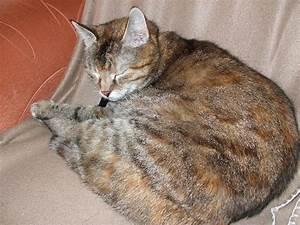 Katze Im Garten Begraben : heute musste meine liebe katze gehen ~ Lizthompson.info Haus und Dekorationen