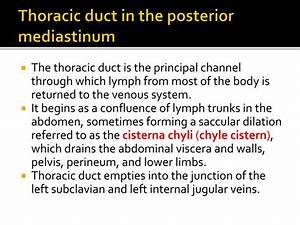 PPT - Mediastinum PowerPoint Presentation - ID:2254714