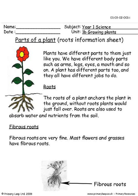 parts   plant roots information sheet primaryleapcouk