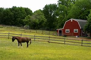 Managing Small Horse Pastures | TheHorse.com