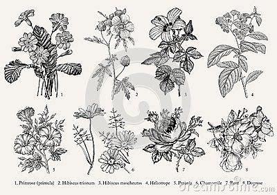 flowers drawings inspiration botany set vintage