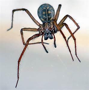 Pflanzen Gegen Spinnen : gru karte spinnen gl ckwunsch bilder gl ckw nsche spinnen ~ Lizthompson.info Haus und Dekorationen