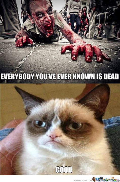Cat Zombie Memes Best Collection Of Funny Cat Zombie Pictures