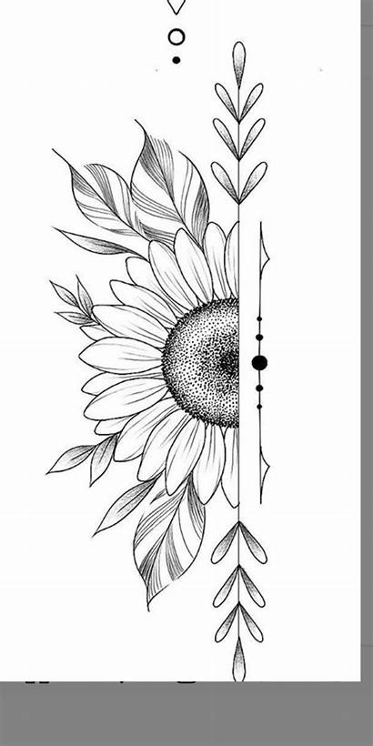 Drawings Pencil Flower Drawing Simple Creative Easy