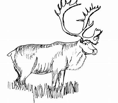 Wildlife Clip Clipart Coloring Pages