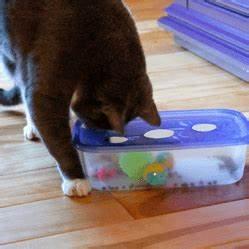 Jouets Pour Chats D Appartement : diy un jouet pour chat stimulant faire tr s facilement ~ Melissatoandfro.com Idées de Décoration
