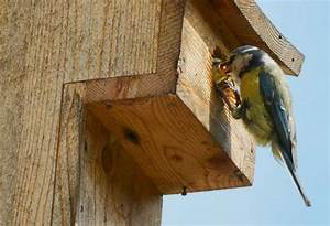Nistkasten Für Blaumeisen : nisthilfe f r blaumeisen bird houses nistkasten blaumeise und nisthilfen ~ Orissabook.com Haus und Dekorationen