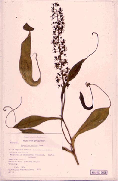 Botanischer Garten Berlin Herbarium by Herbarium Hortus Siccus Bgbm