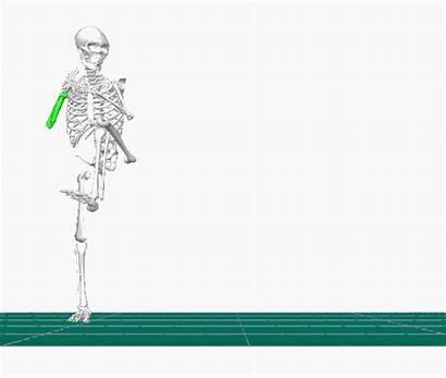 Analysis Analyses Biomechanical Signal Step Side Bailey