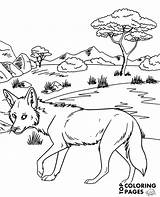 Coloring Coyote African Pages Topcoloringpages sketch template