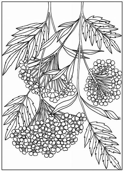 Coloring Pages Flower Adult Outline Drawing Flowers