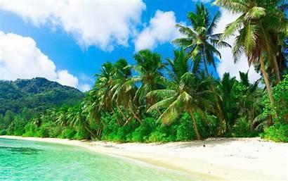 Palm Tropical Landscape Beach Trees Nature Clouds