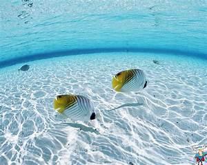 Fond Ecran Mer : wallpaper maldives 40 wallpaper en haute d finition hd ~ Farleysfitness.com Idées de Décoration